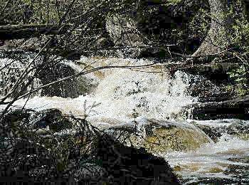 A stream of rushing water - ideal fishing in Algonquin Park
